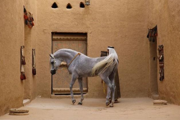 بعض من ألفاظ ومصطلحات الخيل عند العرب قديماً