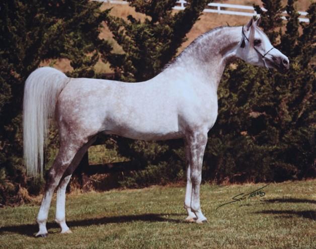 مجلة أمريكية: وفاة اثنين من كبار مربي الخيول العربية الأصيلة في العالم