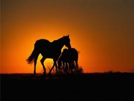 التواصل الاجتماعي ونجاح انتاج للخيول