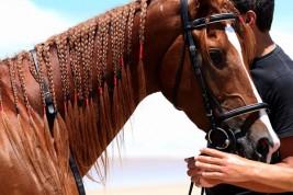 «الزراعة المصرية»: اعتماد المستشفى البيطري العسكري لتطبيق اشتراطات تصدير الخيول