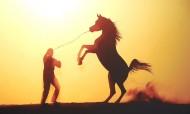 مركز الجواد العربي بالكويت يكرم الفائزين بمسابقة تصوير الخيول العربية