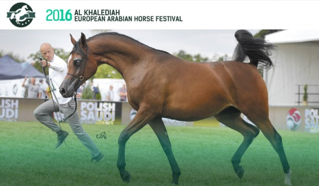 Al Khalediah European Arabian Horse Festival  We are changing for you!