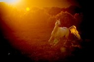 صحة الأمعاء ..مفتاح سعادة الخيول!