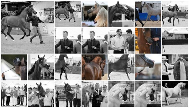 مقتطفات صور من بطولة منتون ٢٠١٦ الدولية لجمال الخيل العربية الأصيلة