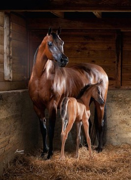 Discovery of pregnancy hormone resolves 50-year-old horse mystery