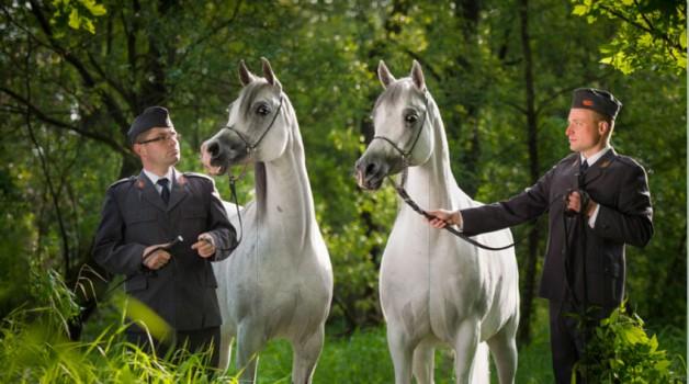 مزاد (فخر بولندا) العالمي 2016 للخيول العربية منتصف الشهر الجاري..