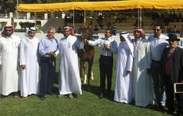 مربط العرب يحقق نصف القاب «الشرق الأوسط» ٢٠١٦ لجمال الخيل العربية – النتائج النهائية