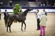 اختتام أولى فعاليات بطولة الجديدة بالمغرب (كأس المربين المغاربة للخيول العربية)– النتائج