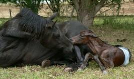 صعوبات الولادة –  نقاط مهمة لتعلمها