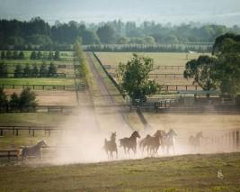 """""""الزراعة المصرية"""": إصدار تراخيص لمزارع الخيول العربية باعتبارها أنشطة إنتاج حيوانى"""