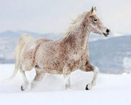 هل القرار السليم: أن تحلق .. أو أن لا تحلق حصانك في مثل هذه الأوقات؟