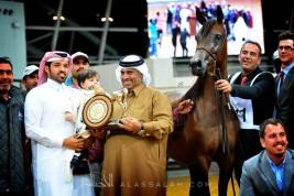 مقتطفات صور من بطولة قطر المحلية الـ ١٩ لجمال الخيل العربية الأصيلة – عدسة: ميثم المبارك