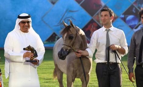 (دبي) و(الزبير) يتألقان في أول أيام بطولة عجمان لجمال الخيول العربية  في نسختها الـ15 – نتائج الفئات