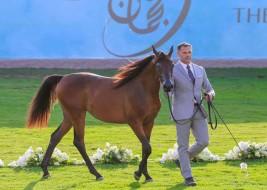 تواصل منافسات بطولة عجمان لجمال الخيل العربية 2017 في يومها الثاني – النتائج