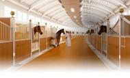 قائمة الخيل المعروضة للبيع في مزاد الشقب الثامن للخيل العربية الأصيلة