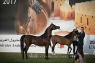 «الزبير» و«عجمان» و «الصقران» و «بن هميله» و «البستان» أبطال ذهب «الإمارات الوطنية» لجمال الخيل العربية –النتائج النهائية