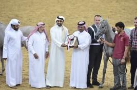اختتام بطولة قطر الدولية السابعة لجمال خيل الجزيرة العربية – النتائج النهائية