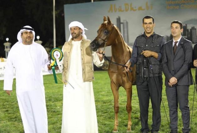 انطلاق بطولة أبوظبي الدولية لجمال الخيول العربية 2017 – نتائج فئات اليوم الأول