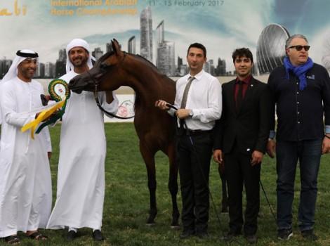 نتائج فئات اليوم الثاني لبطولة أبوظبي الدولية لجمال الخيول العربية 2017
