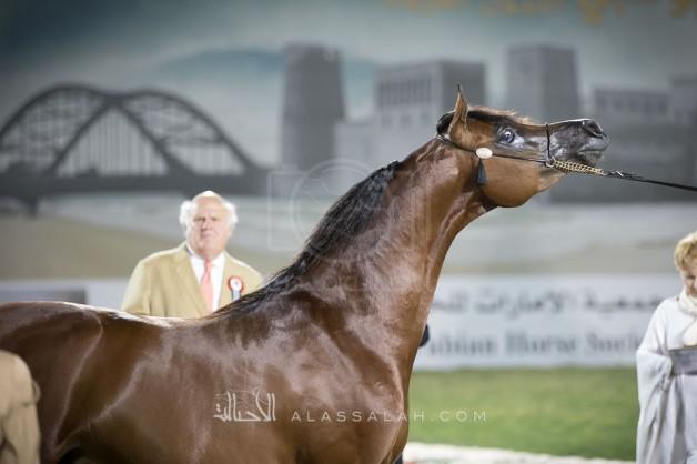 مقتطفات من بطولة ابوظبي الدولية ٢٠١٧ للخيول العربية