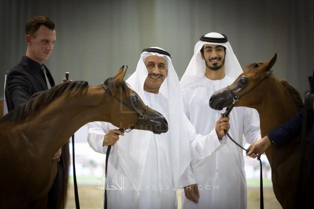 الإمارات تستعد لإقامة بطولة دبي الدولية الـ ١٤ للجواد العربي والمعرض المصاحب