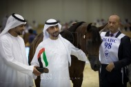 مقتطفات من اليوم الأول من بطولة دبي ٢٠١٧ الدولية للجواد العربي