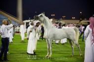صور مقتطفة من بطولة (الأحساء الوطنية الثامنة) لجمال الخيل العربية .. بعدسة «التويجري» و «الغانم»