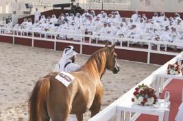 إقبال كبير بمزاد سوق واقف للخيول العربية و (يمامة الشقب) الأعلى سعراً