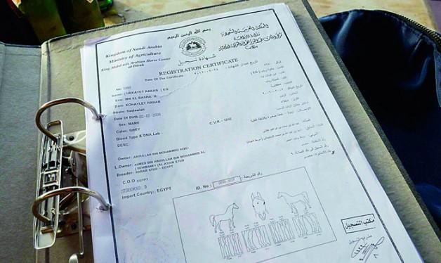 تصريحات مربيي خيول عربية: رسوم «ديراب» لإصدار جوازات الخيول لا يقابلها خدمة مميزة!