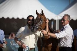 «عذبه» و «السيد» يسجلان أعلى درجات (منتون الدولية) لجمال الخيل العربية 2017 في يومها الأول – النتائج