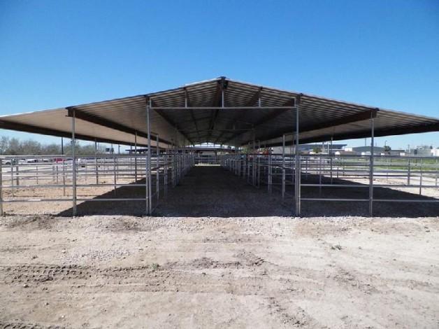 موسم الصيف .. أهمية الظل والمأوى للخيول