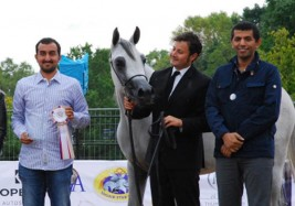 «الشقب» و«البداير» و«دبي» ابطال (براغ) الدولية لجمال الخيل العربية 2017 بجمهورية التشيك – النتائج النهائية
