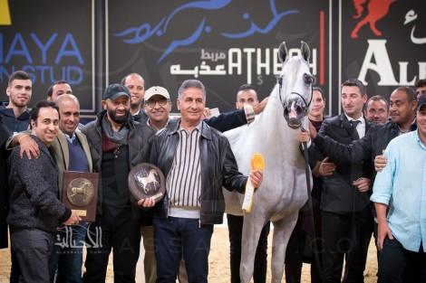 «الصقران» يحقق أعلى درجات (كأس كل الأمم)  2017 لجمال الخيل العربية – نتائج فئات اليوم الثاني