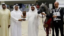 (الزبير) و(دبي) أبطال (السلالة المصرية) في النسخة الـ11 من بطولة الشارقة – النتائج النهائية