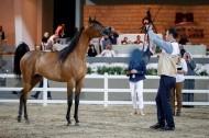 (الخشاب) يتوشح بذهب وفضة وبرونز (الكويت الوطنية السادسة) لجمال الخيل العربية – النتائج النهائية