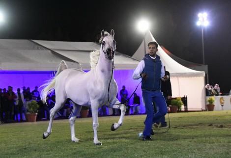 اختتام بطولة فيصل بن حمد آل خليفة الثامنة بالبحرين – النتائج النهائية