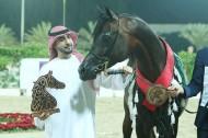 (عجمان) و(دبي) و(البداير) و(الزبير) أبطال (الشارقة للجواد العربي الإنتاج المحلي) في نسخته الـ14 – النتائج النهائية