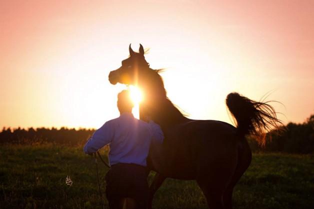 عقدة الأجنبي تطال الخيول العربية الأصيلة