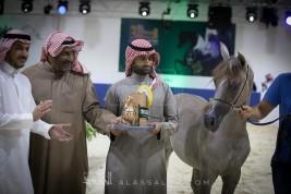 صور مقتطفة من بطولة الرياض ٢٠١٨ لجمال الخيل العربية الأصيلة