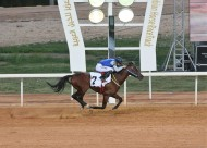 """الجواد """"شارق الخالدية"""" يفوز بشوط الخيل العربية بسباقات الخالدية"""