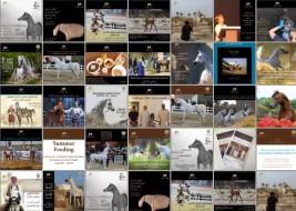 «بيت العرب» قدم اكثر من ٣١ فعالية في موسم٢٠١٧ لمربيي الخيل العربية في الكويت