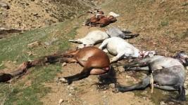 مجزرة خيول في إيران.. الشرطة تردي 90  حصاناً