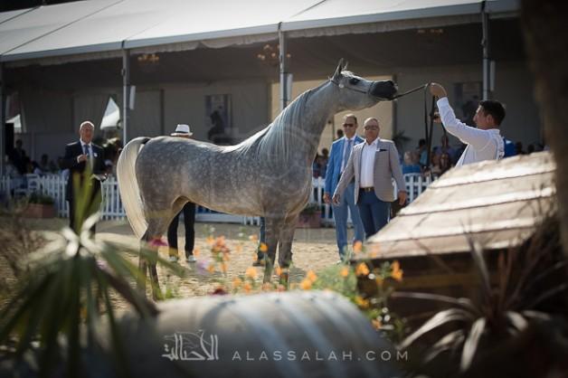 صور مقتطفة من بطولة منتون الدولية ٢٠١٨ للخيل العربية الأصيلة