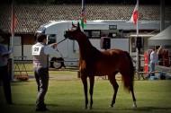 ذهبيتان وبرونزية لـ«عجمان» في بطولة ستروهن الدولية ٢٠١٨ – النتائج النهائية