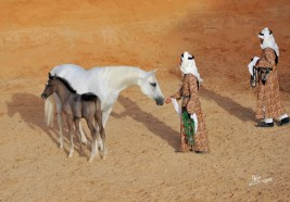 الخيل الصحراوية الجزيرية السعودية