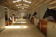 مراكز إيواء الخيول في الجنادرية ما بين الاهمال والمحسوبية