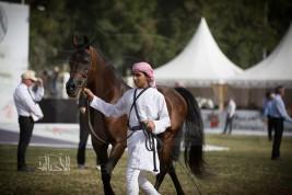 العارض المتميز «عبدالرحمن» يفخر  بالزي العربي في منافسات جمال الخيل