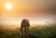 الزراعة تنظم ندوة علمية عن المكملات الغذائية للخيول