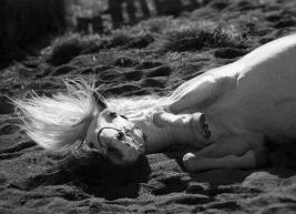 فيديو .. تعرف على طريقة النوم لدى الخيول