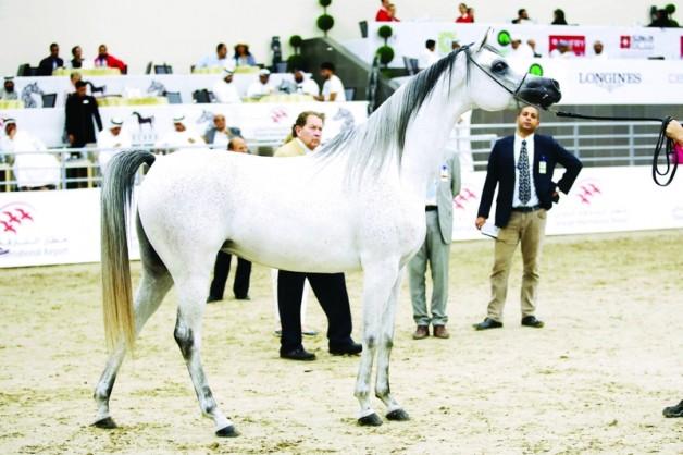 النتائج النهائية لبطولة الشارقة للسلالة المصرية ٢٠١٨ و«الزبير» يستحوذ على أغلب الألقاب
